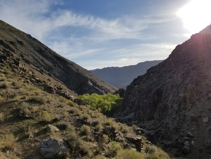 Death Valley 2018 Oasis